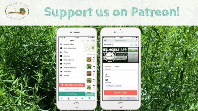 Patreon blog post
