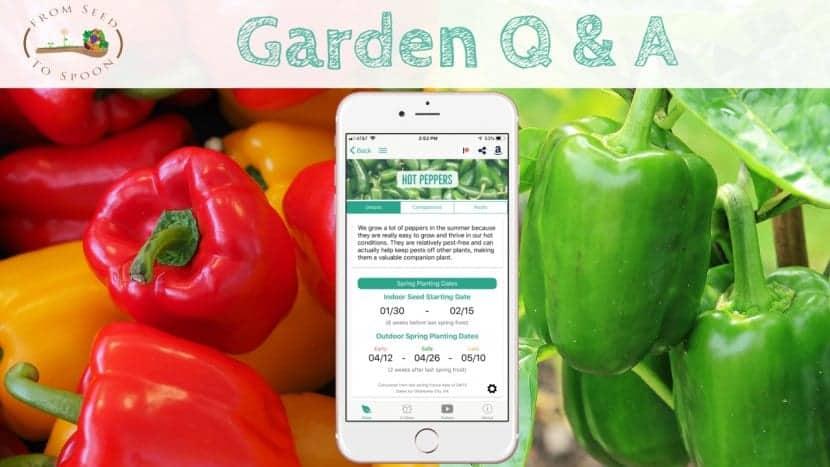 Q&A_ Frozen Peppers