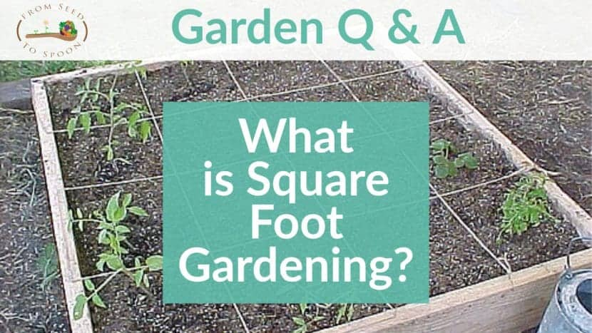 Q&A_ What is Square Foot Gardening_