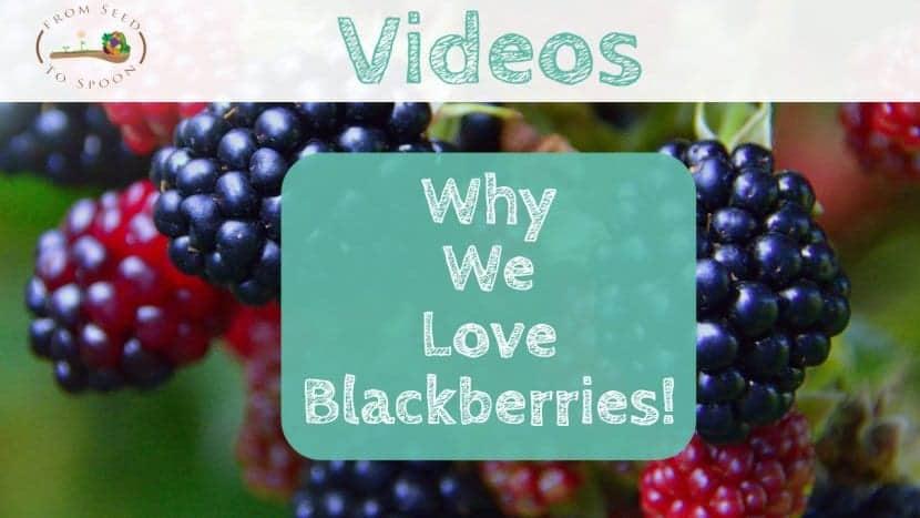 Why We Love Blackberries