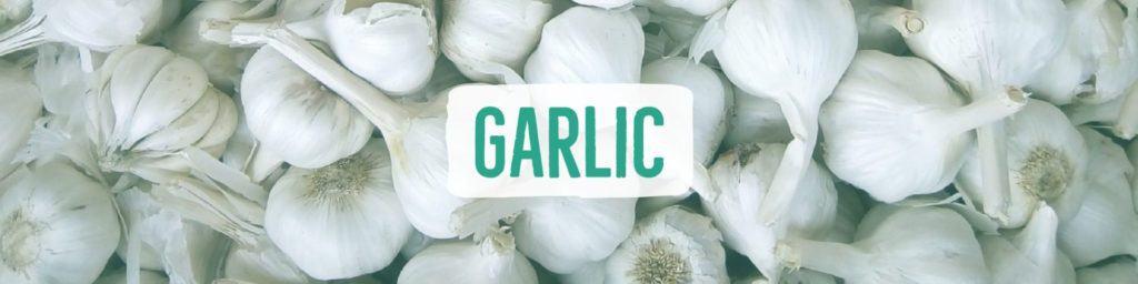 garlic-header
