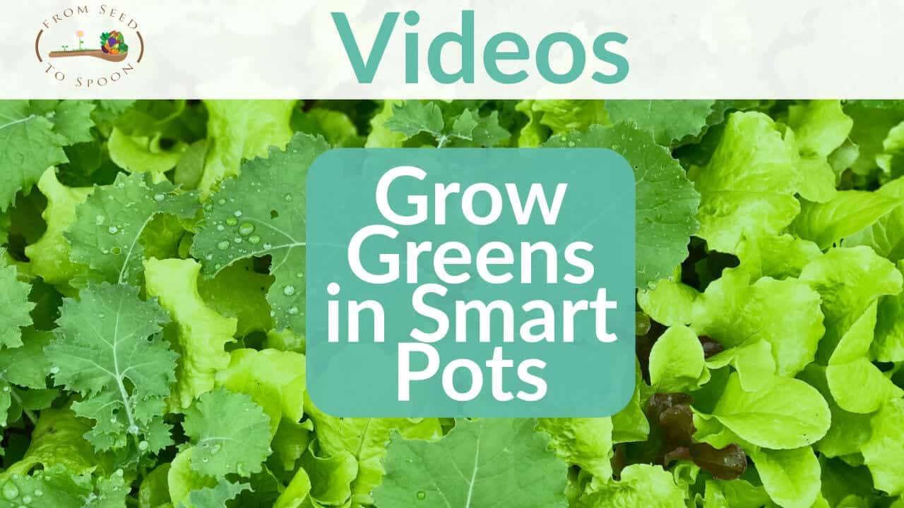 How to Grow Greens in Smart Pots - From Seed to Spoon ...