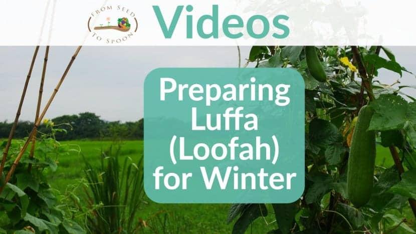 Loofah update video