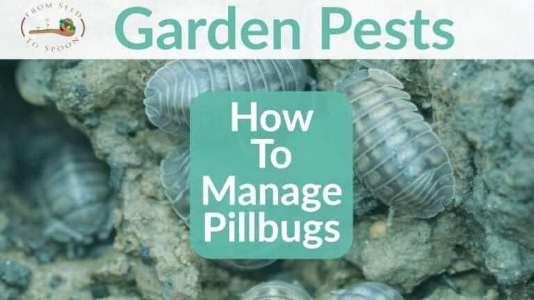 Pillbug blog post