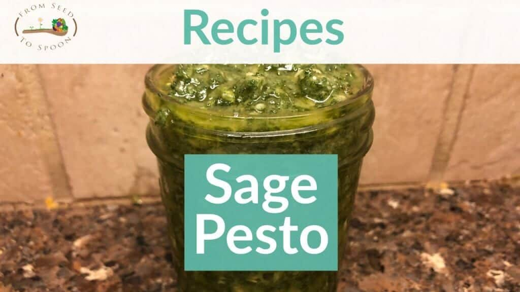 Sage Pesto recipe