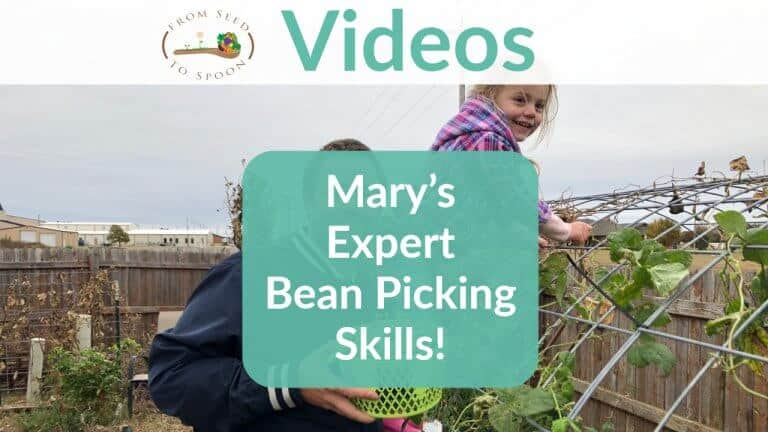 Watch Mary's Expert Bean Picking Skills