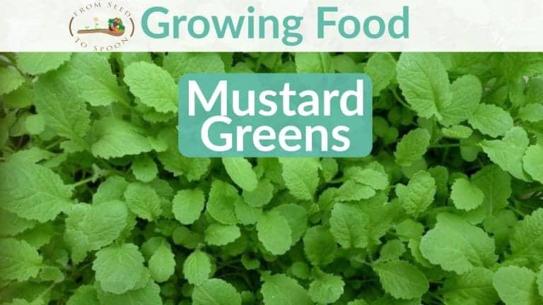 Mustard Greens blog post