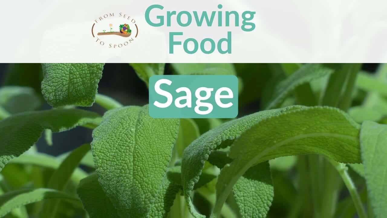 Sage blog post