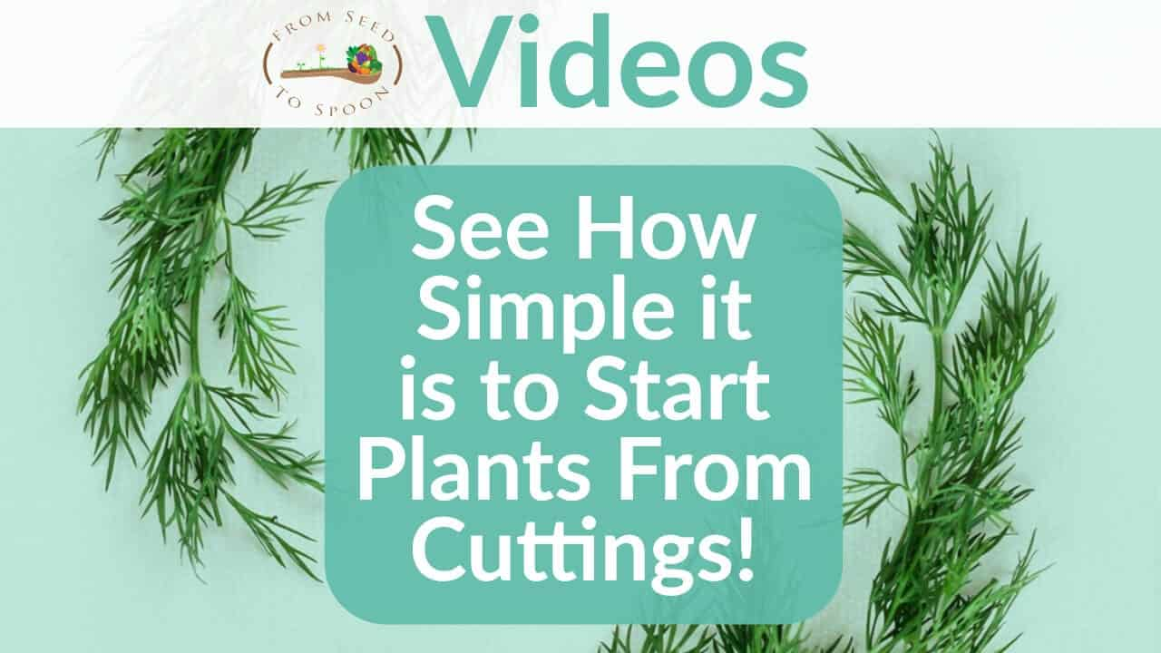 See How Simple it is to Start Plants From Cuttings!