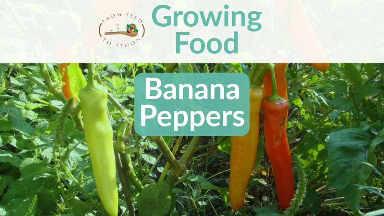 Banana Peppers blog post
