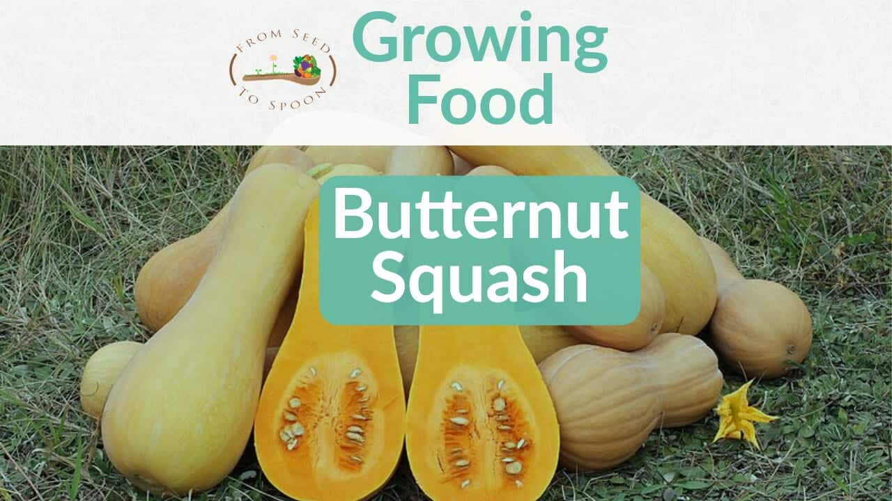 Butternut Squash blog post
