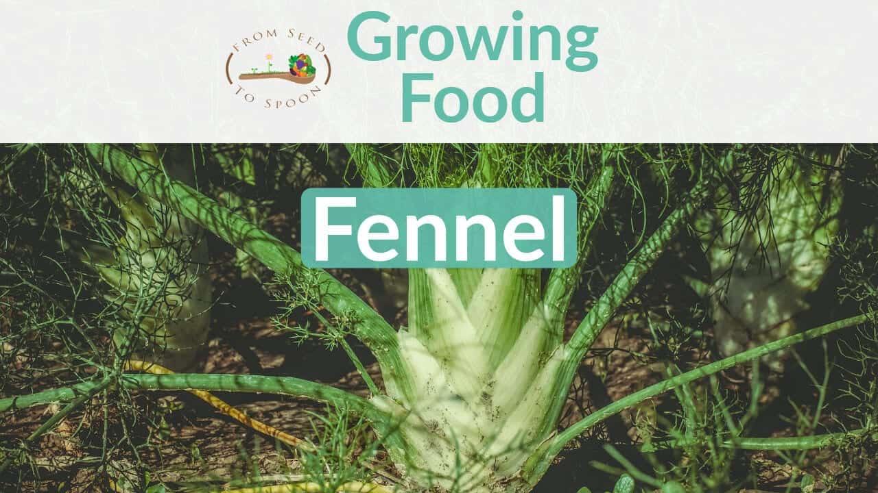 Fennel blog post
