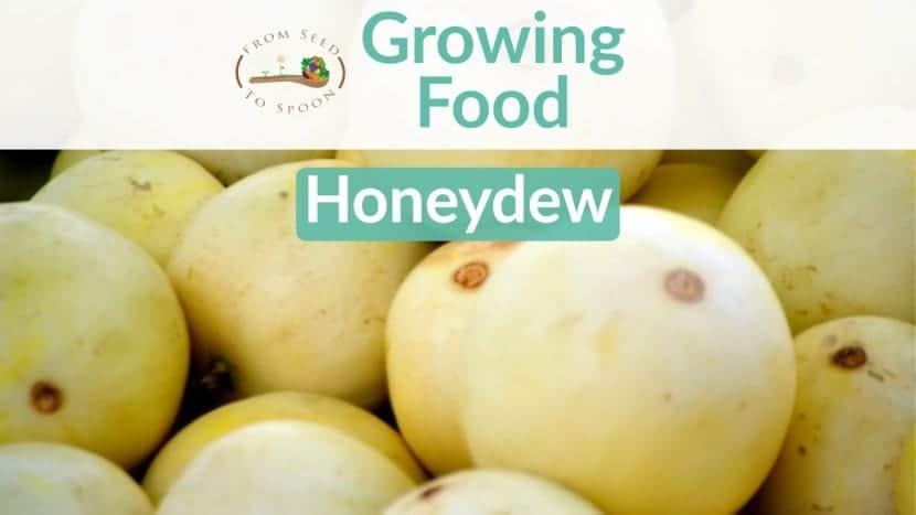 Honeydew blog post