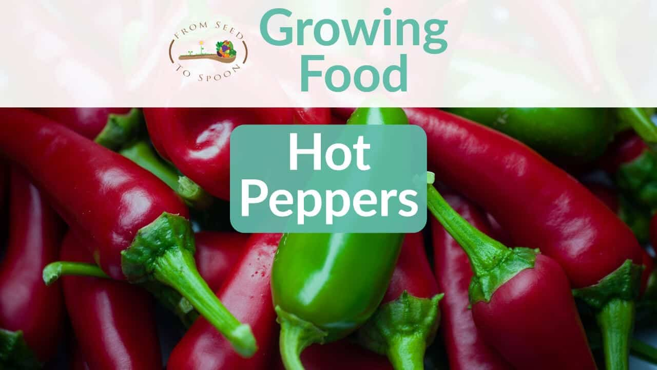 Hot Peppers blog post