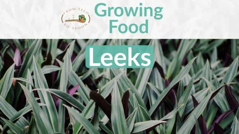 Leeks blog post