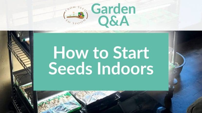 Q&A_ Indoor Seed Starting