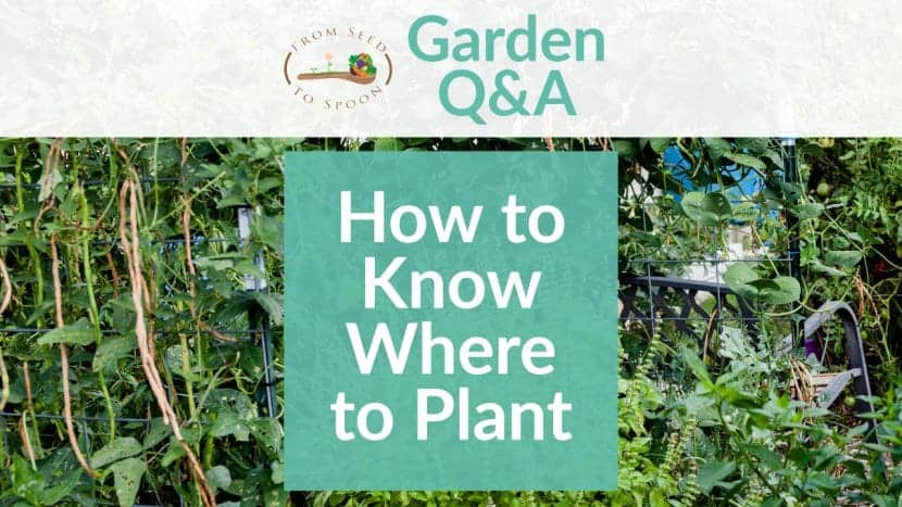 Q&A_ Location