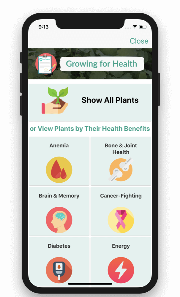 From Seed to Spoon – Growing for Health