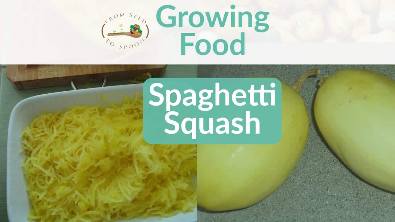 Spaghetti Squash blog post