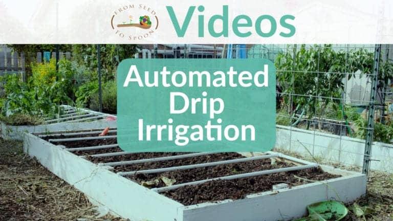 Automated Drip Irrigation