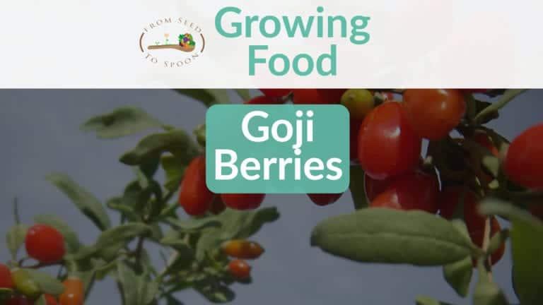 Goji Berries blog post