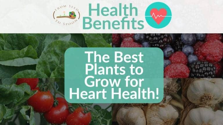 Heart Health blog post