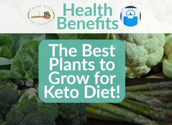 Keto Health