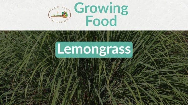 Lemongrass blog post