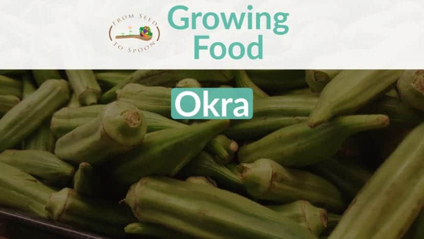 Okra blog post