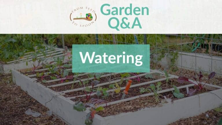 Q&A_ Watering