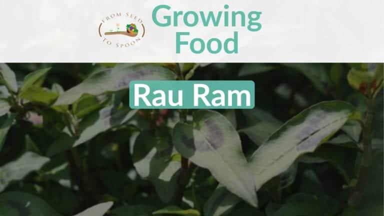 Rau Ram blog post