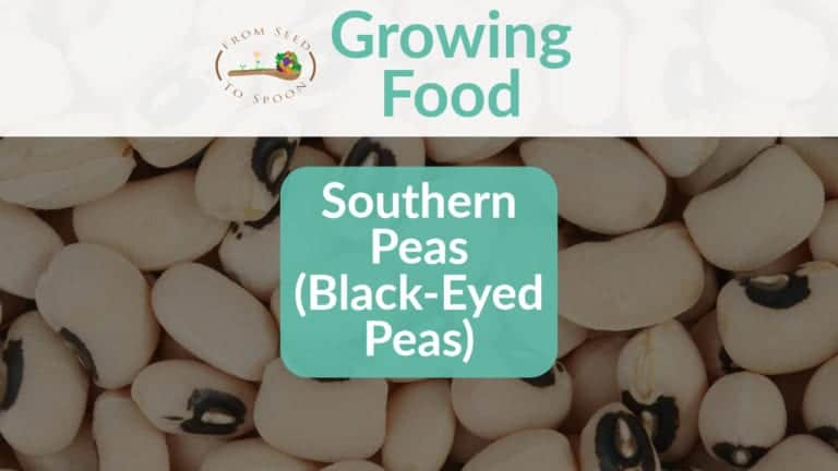 Southern Peas blog post