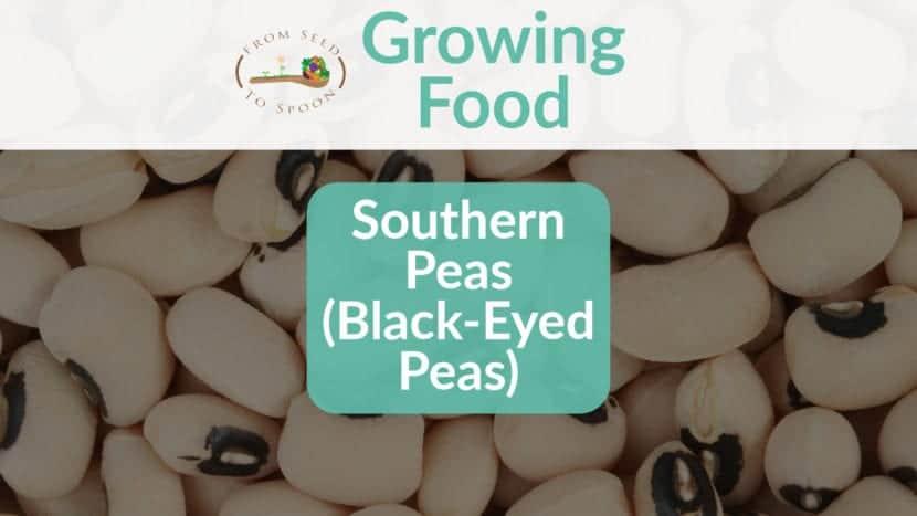 Southern Peas blog post