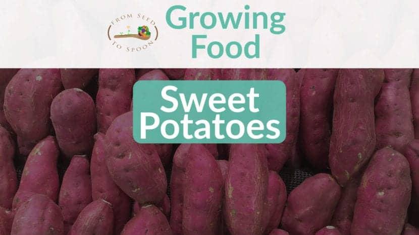 Sweet Potatoes blog post