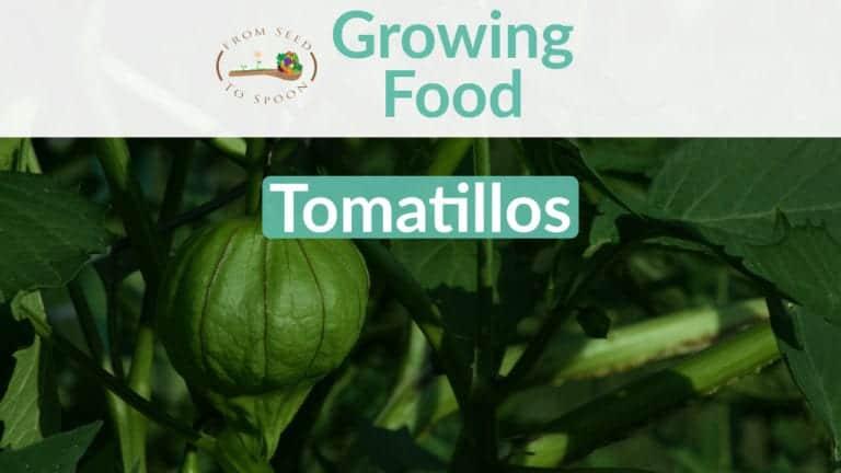 Tomatillos blog post