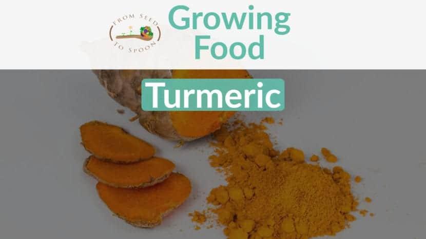 Turmeric blog post