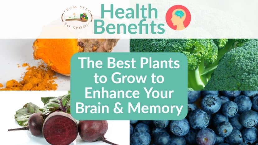 Brain & Memory