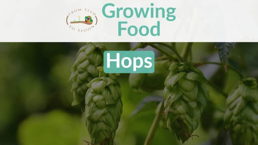 Hops blog post