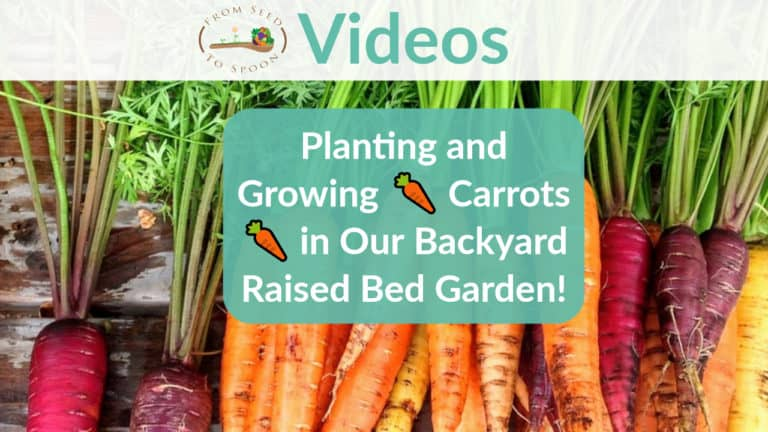 Planting Carrots video