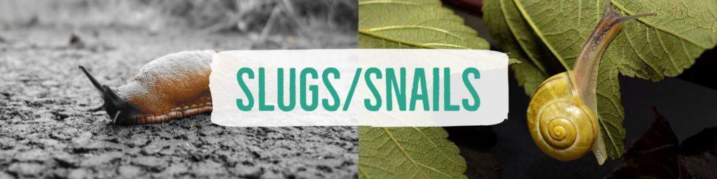 slugssnails-header