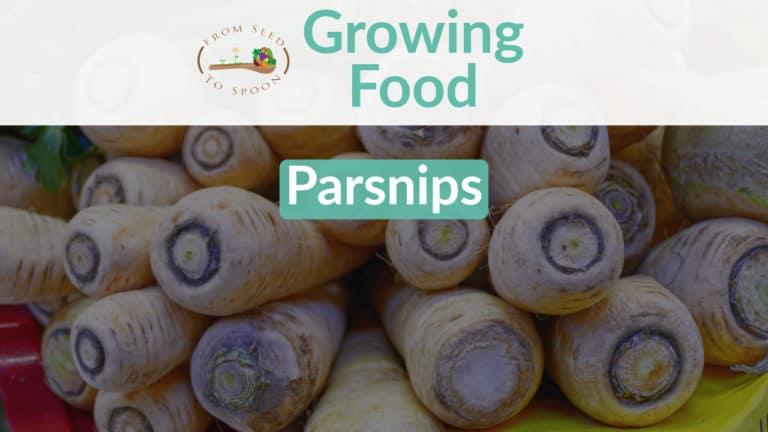 Parsnips blog post