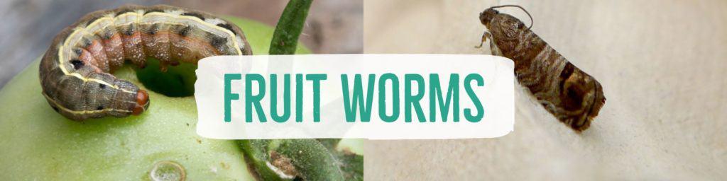 fruitworms-header