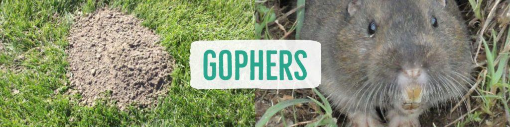 gophers-header