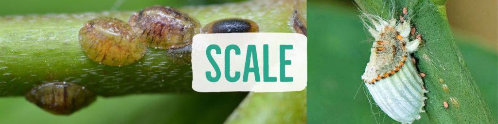 scale-header
