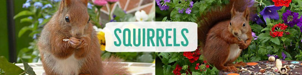 squirrels-header