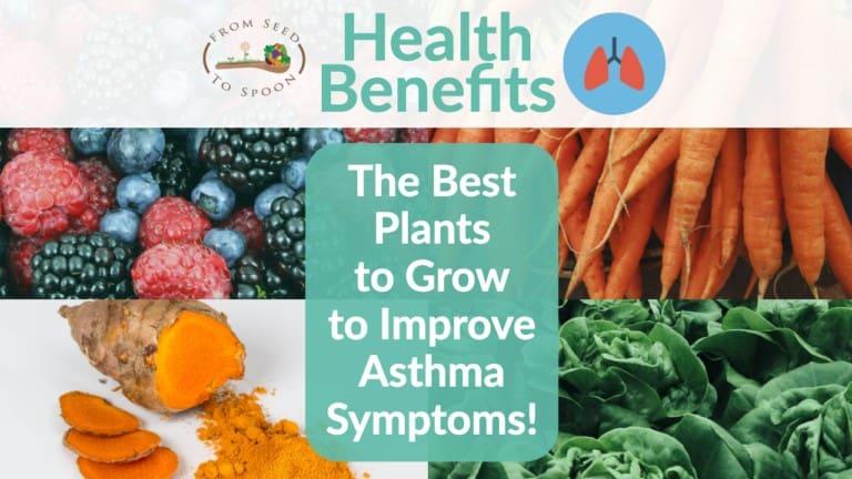 Asthma blog post (2)