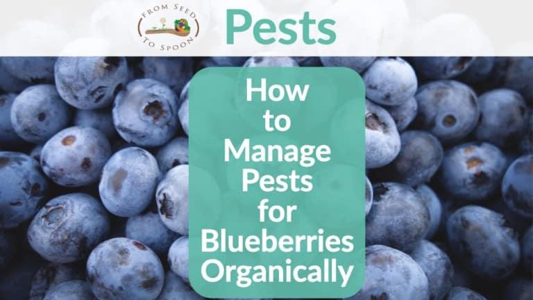 Blueberry pests header