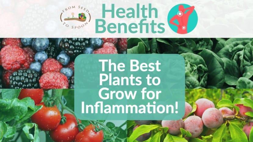 Inflammation blog post