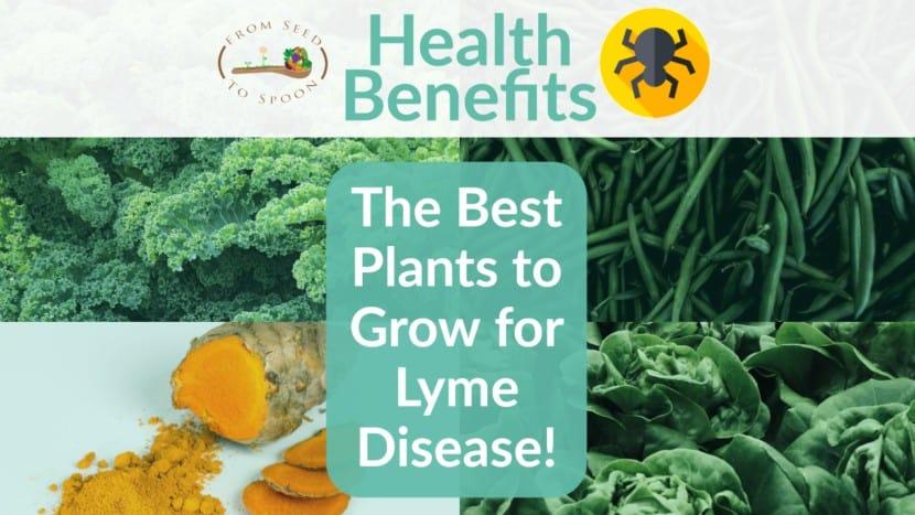 Lyme Disease blog post