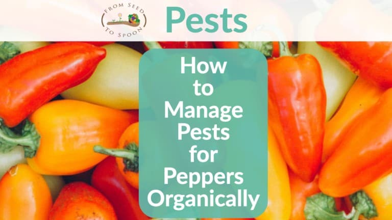Peppers pests header